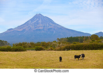 mount taranaki in new zealand - spectacular view at mount...