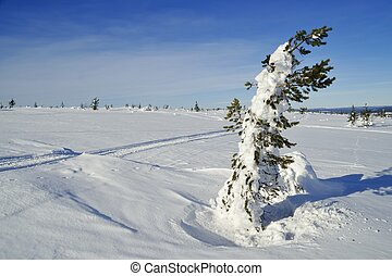Cross country ski hiking trail with red crosses a mountain...
