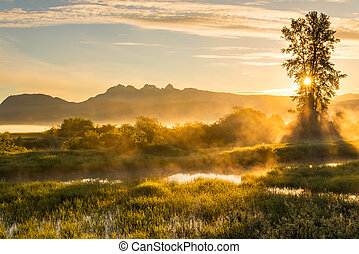 Yellow Misty Landscape with Mountains - Mountains and yellow...