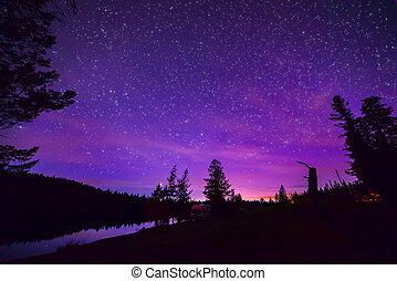 紫色, Stary, 夜晚, 天空, 在上方, 森林, 以及,...
