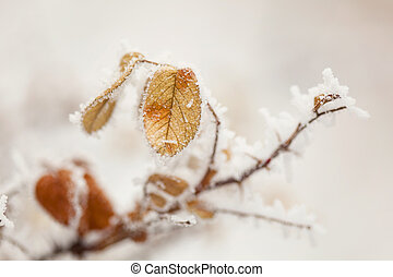 Frozen branch of tree with one leaf Close-up