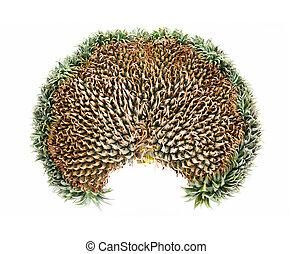 exoticas, mutação, abacaxi