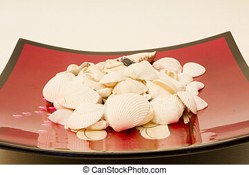 isolated object - White shells from the Red Sea in the...