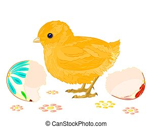 Easter chick hatched
