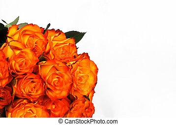 Orange roses background isolated on the white