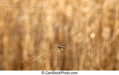 Spider & grain - region Liptov, SLovakia