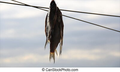 Small fish hanging and drying - Four small fish hanging and...