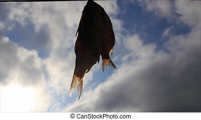 Dried fish - Few dried fish on sky with clouds background