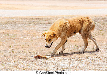Stray dog - Close up dirty stray dog looking at the bone on...