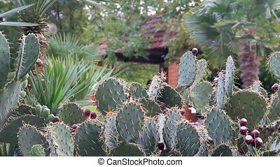 Cactus thicket on background wall - Cactus thicket on...