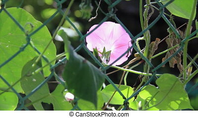 Pink flower behind metal grate