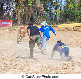 PHETCHABURI - FEBRUARY 22 : 143rd Cow Racing Festival on...