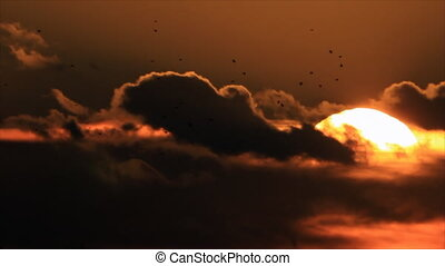 Birds flock at sunset sky - Birds flock silhouettes on...