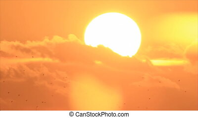 Birds silhouettes at sun backdrop - Birds silhouettes on...