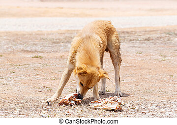 Stray dog - Close up dirty stray dog try to hold the bone in...