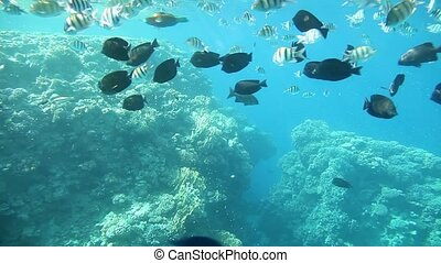 Coral reef, Sharm El Sheikh Egypt - Underwater footage in...