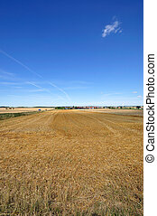 stubble field after the harvest