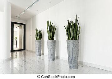 belleza, plantas, en, pasillo,