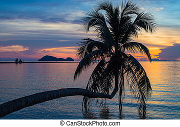 Coconut palm tree silhouette at sunset. Koh Phangan island, Thailand