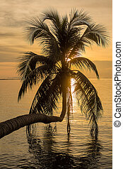 Coconut palm tree silhouette at sunset. Koh Phangan island,...