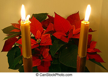 Christmas flower and candles - Red christmas flower...