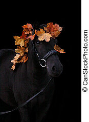 Black cute pony portrait with autumn leaves on black...