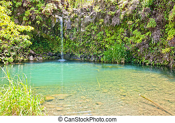 Spring fed pool on the road to Hana - Maui - day view of...