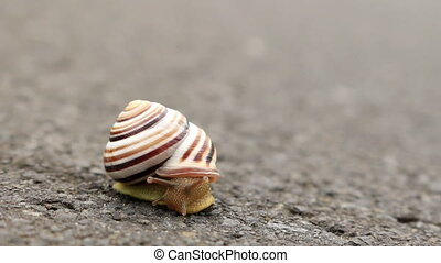Small snail on the road