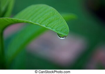 rain drop on  the edge of a leaf