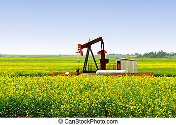 Pump Jack in Alberta Canola Field - A natural gas pump jack...