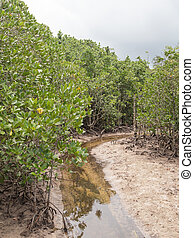 mangroves and clean little river in Seychelles