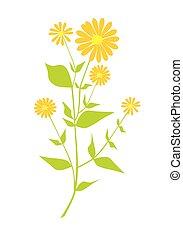 Plant with orange flower - Plant with orange flower - vector...