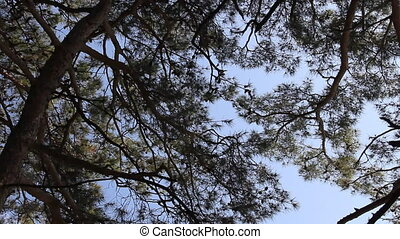 Pine cone needles