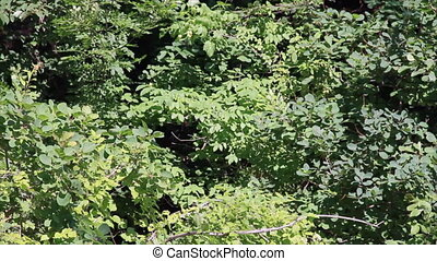 Trees foliage in forest - The dense foliage of the trees in...