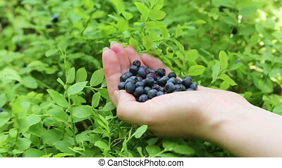 Woman's hand with blueberries - Close-up view of woman's...
