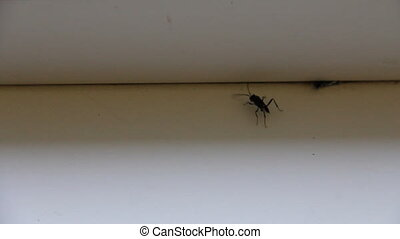 Careful black insect