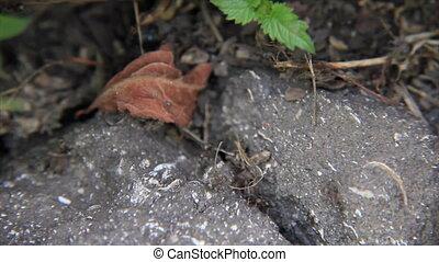 Ants asphalt slot - Ants go in broken asphalt slot