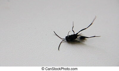 Insect on white background