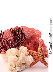 coral and starfish - starfish and corals on white background