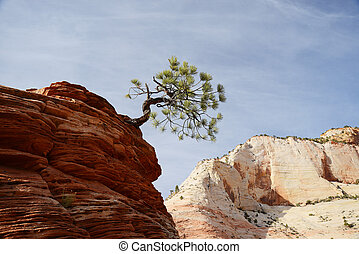 tree on sandstone rock - a small tree sticking out of red...