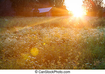 Meadow landscape at sunset and big lens flare