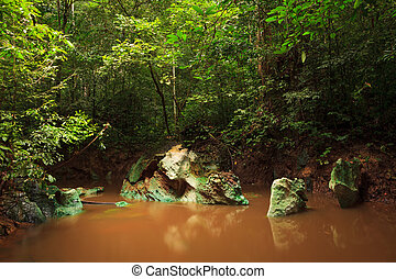 Small jungle river in borneo - Small muddy jungle river in...
