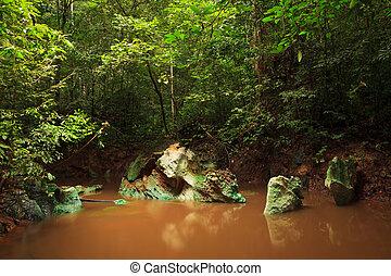 Small jungle river in borneo - Small muddy jungle river in...