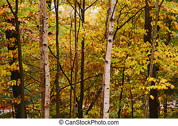 vermont fall foliage - trees in vermont are changing color...