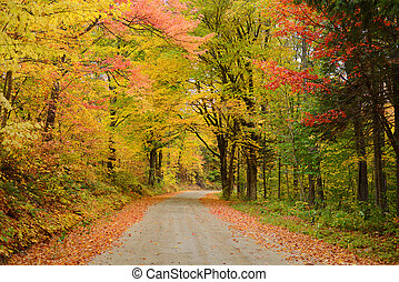 vermont road in autumn - a local road in vermont with...