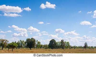Timelapse clouds and skies over the rice field after reap,...