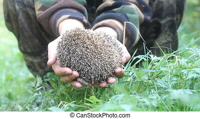 hedgehog in hands trust leaving care - hedgehog prickly...