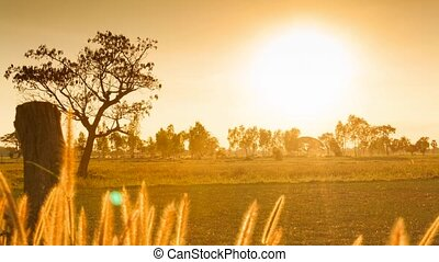 Sunset over rice field,upcountry in Thailand ,Asia, HD time...