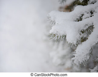 Fir-tree Branch Covered with Snow. Christmas Background