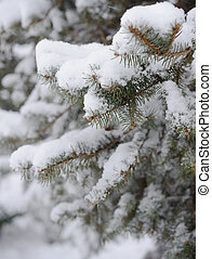 Fir-tree Branch Covered with Snow Christmas Background with...